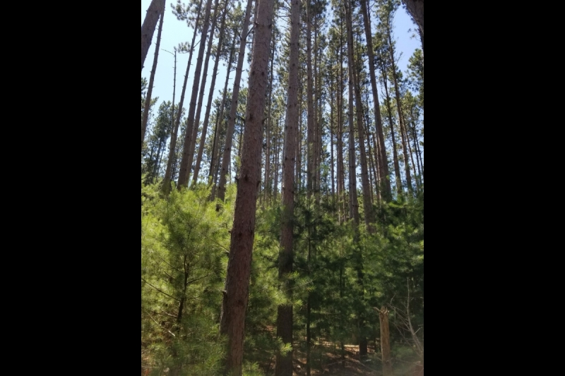 Building Site for Sale in Tall Pines