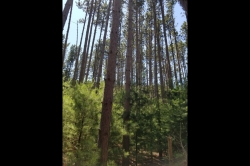 1889057, Building Site for Sale in Tall Pines