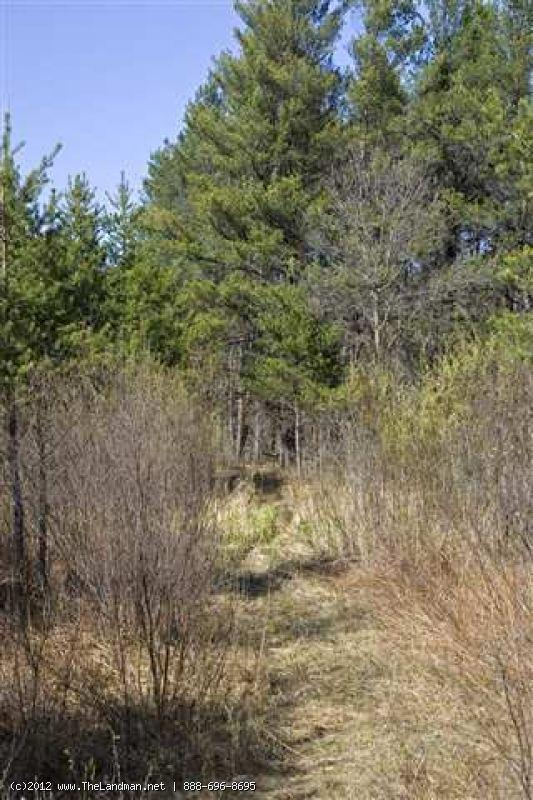 1592000 - Central Wisconsin Pine Plantation For Sale, WI!